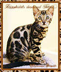 DAZZlEDOTS DIAMOND TIARA ~ Photo by MaraImage of Dazzledots Bengals